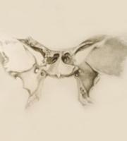 Bernard Caroline - Ostéopathe
