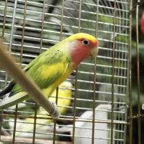Comment choisir la cage de mon oiseau ?